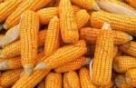 Купити кукурудзу оптом можна у компанії Орас!