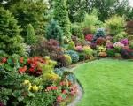 Низкорослые декоративные деревья станут украшением вашего двора