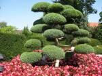 Приобретите карликовые декоративные деревья по выгодной цене