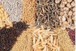 Экономьте свое время - заказывайте семена по почте