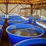 Продається басейн для розведення риби. Вигідна пропозиція!