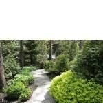 Озеленение и ландшафтный дизайн