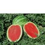 Семена арбуза Кримсон Свит (фото)