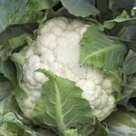 Семена капусты цветной Каспер (фото)
