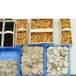 Свіжі гриби оптом (фото)