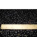 Горобина заморожена чорна (фото)