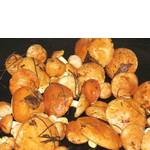 Гриби маслюки свіжі (фото)