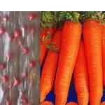 Дражоване насіння на стрічці Морква довга без серцевини (фото)