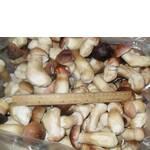 Білі гриби (фото)
