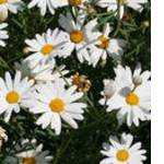 Экстракты растительные цена купить (фото)