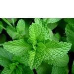Экстракты растительные заказать недорого (фото)
