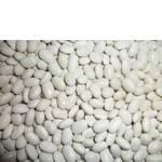 Семена фасоль недорого (фото)