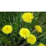 Экстракты растительные недорого (фото)