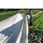 Агроволокно 23% біле (фото)