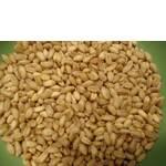 Пшениця білозерна зерно (фото)