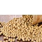 Соя без ГМО купити (фото)