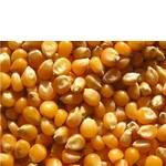 Купить посевной материал кукурузы по ценам 2011 года вы можете в компании Агроспецпроект