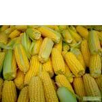 Гибриды кукурузы американской компании Пионер заняли лидирующие позиции в Европе и Украине по рейтингам продаж