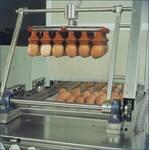 Сортировка яиц в машине VEGA 16