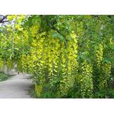 Озеленення присадибної ділянки - садовий центр Казковий сад