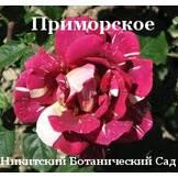 Декоративные растения: хвойные, лиственные деревья, кустарники, цветы - Опытное хозяйство Приморское