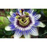 Купить малину саженцы, яра удобрения, сухофрукты оптом,купить декоративные растения: BerryShop