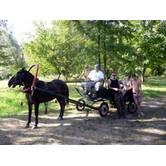 Сільський зелений туризм: катання на конях, збір грибів та багато іншого