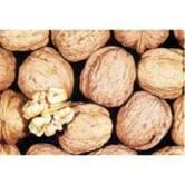 Вирощування саджанців волоського горіха Казаку