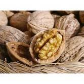Вирощування саджанців волоського горіха Фержан