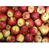 Вирощування яблук Гала