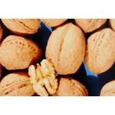 Вирощування саджанців: Калашарський горіх
