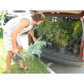 Доставка рослин для озеленення ділянки у найкоротший термін