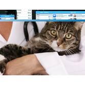 Создание мобильного приложения для ветеринарной клиники