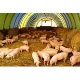 Будівництво свиноферм