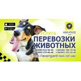 Перевезення домашніх тварин в таксі Одеси