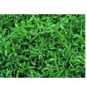 Газонна трава для лінивих від «Агро Світ»
