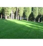 Продається газонна трава. Ціна - від виробника