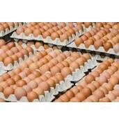 Інкубаційні яйця бройлера РООС-308