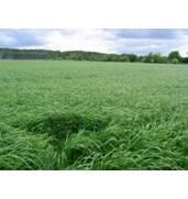 Купити кормові трави - оптом і недорого