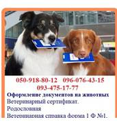 Оформление родословных на собак. Щенячьи карточки, Родословные. Клуб
