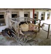 Купить станок для обработки копыт животных