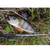 Рибальська снасть в інтернет-магазині «Carp Expert»