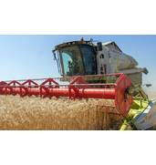 Заказать качественные услуги по уборке урожая зерновых в Хмельницкой области в «Авантаж»