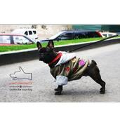Одежда для собак французский бульдог и крупных пород – ТМ DOGGO