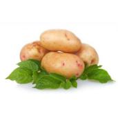 Купити картоплесаджалку за вигідною ціною