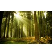 Відпочинок в сосновому лісі Дніпропетровська область: комфортна турбаза Перлина