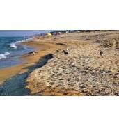 Поїздки на Азовське морев Новопетрівку з Дніпра недорого: 28 квітня - 1 травня