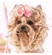 Креативный груминг собак во Львове недорого