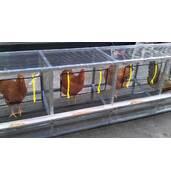 Клеточное оборудование для кур несушек цена низкая