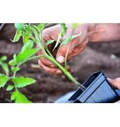 Покупайте качественное удобрение для помидор